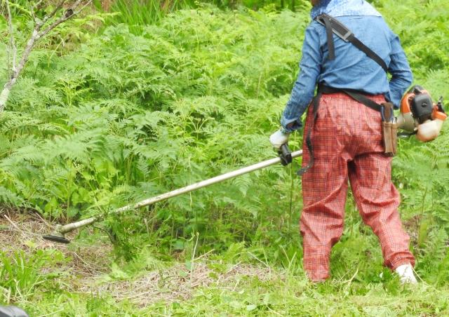益田市で草刈りにかかる料金相場は?追加料金や業者選びのコツまで解説